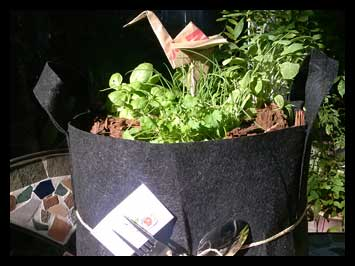 Gifted to the Pasadena Ca. Hill Branch Library - A Zesty Green Selection of Kale, Cilantro, Parsely, Sage and Basil!